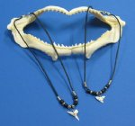 18 inch Wholesale Shark Tooth Necklaces on Black Cord - $15.50 a dozen ($1.29 ea); 3 dz+ @ $13.60 a dozen